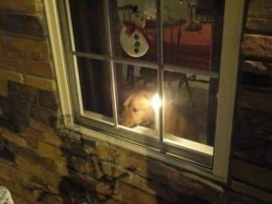 My dog Bubba on christmas morning