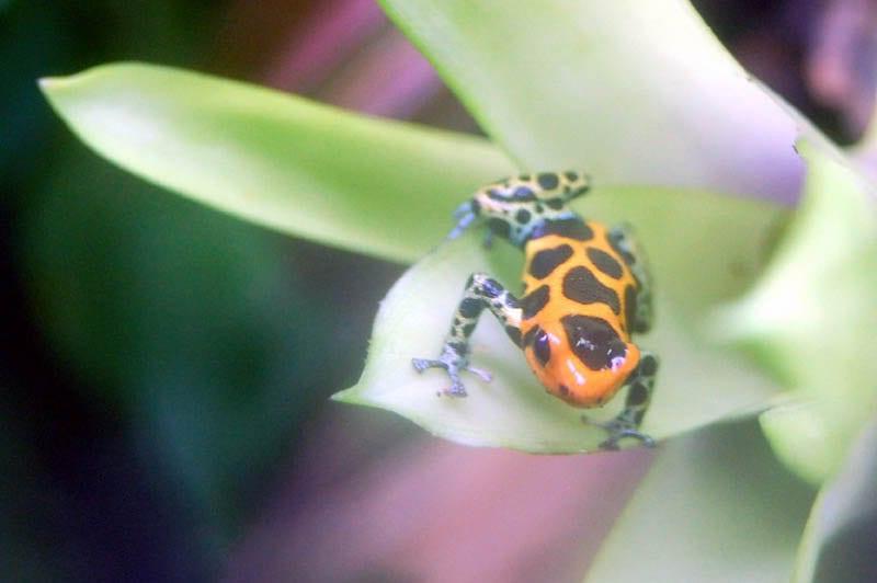 snakesfrog_0116