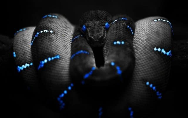 k|ngp|n Has Release a....... Snake?